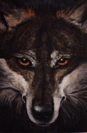 Spirit Wolf, � Diana Stanley